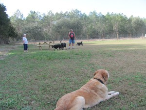 Charlie likes to shair his 1/2 acre dog park with all his friends.