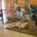 Man scratching dogs bellies