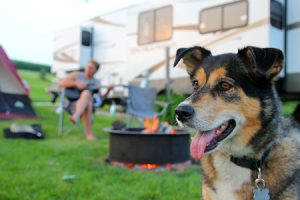 Dog on Camping Trip